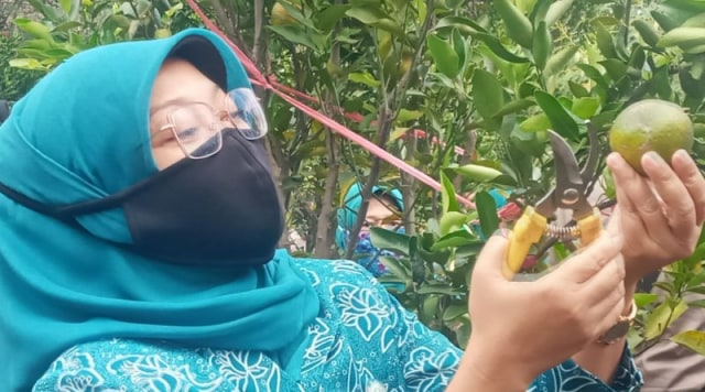 Lulis Irsyad Siap Promosikan Jeruk Menjadi Ikon Kabupaten Pasuruan  (757601)
