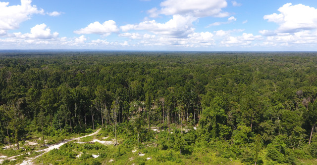 Perlu Sinergi Kebijakan untuk Mempertahankan Hutan Papua (89823)