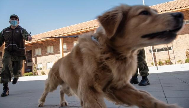 Anjing Bisa Deteksi Orang Terinfeksi Virus Corona, Tingkat Akurasinya Tinggi? (1294314)