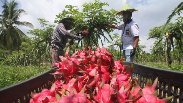 Ada Skema Baru Pajak Pertanian, Potensi Penerimaan Negara Hanya Rp 300 Miliar