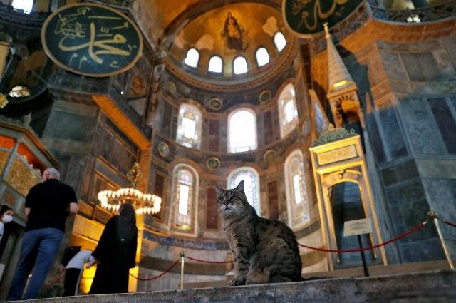 Hagia Sophia Jadi Masjid, Gli Si Kucing Tetap Boleh Tinggal (327411)
