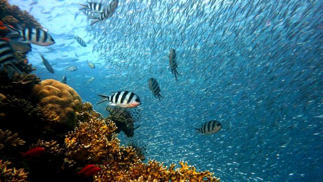 15 Tahun Swedia Curiga Kapal Selam Asing, Ternyata yang Dicari Suara Kentut Ikan (43103)