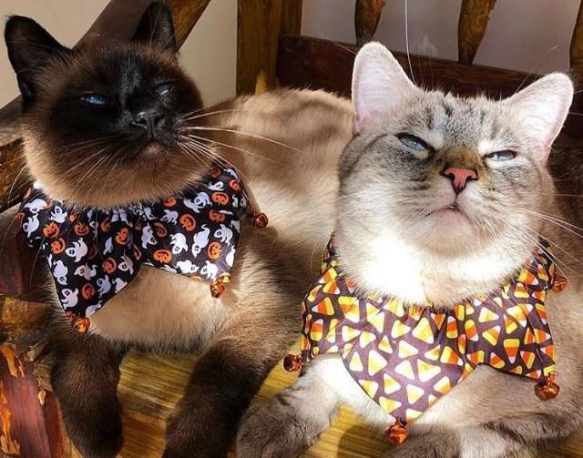 Jiwa Misqueen Meronta Lihat Kucing Peliharaan Termahal, Ada yang Seharga Alphard (339135)