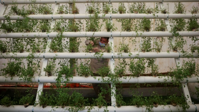 Foto: Pengungsi Suriah Manfaatkan Kasur Bekas untuk Tanaman Hidroponik (316123)
