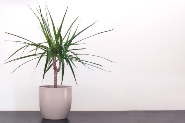 Ragam Tanaman Hias Indoor yang Mudah Dirawat Bersama Anak di Rumah (221667)