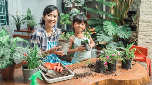 Ragam Tanaman Hias Indoor yang Mudah Dirawat Bersama Anak di Rumah (221665)