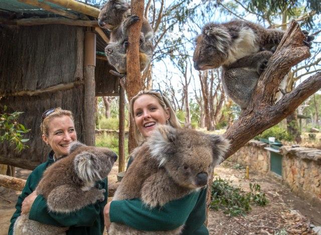 Wisata Wildlife yang Wajib Kamu Jelajahi saat ke Australia (138161)
