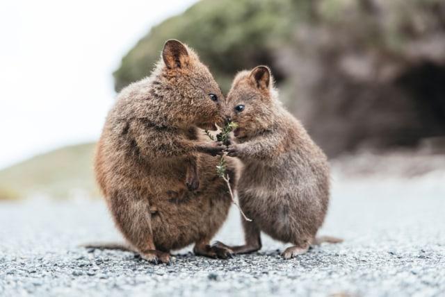 Wisata Wildlife yang Wajib Kamu Jelajahi saat ke Australia (138162)