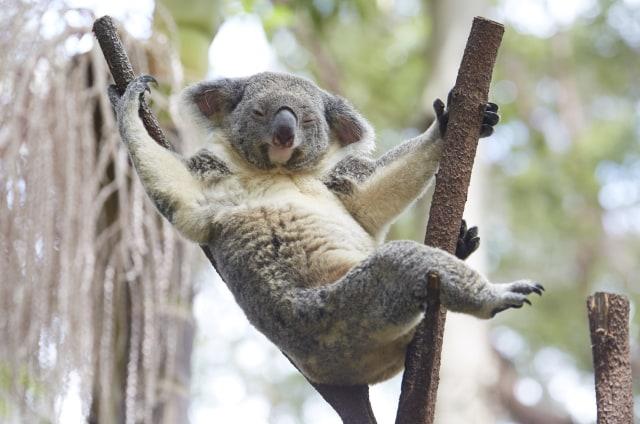 Wisata Wildlife yang Wajib Kamu Jelajahi saat ke Australia (138163)