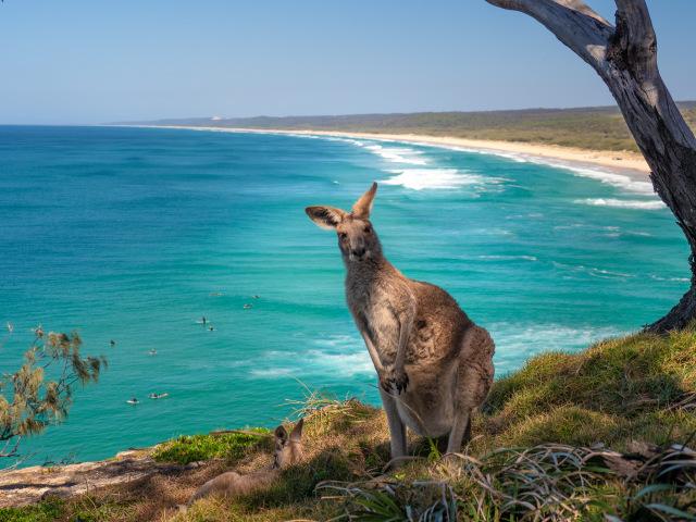 Wisata Wildlife yang Wajib Kamu Jelajahi saat ke Australia (138165)
