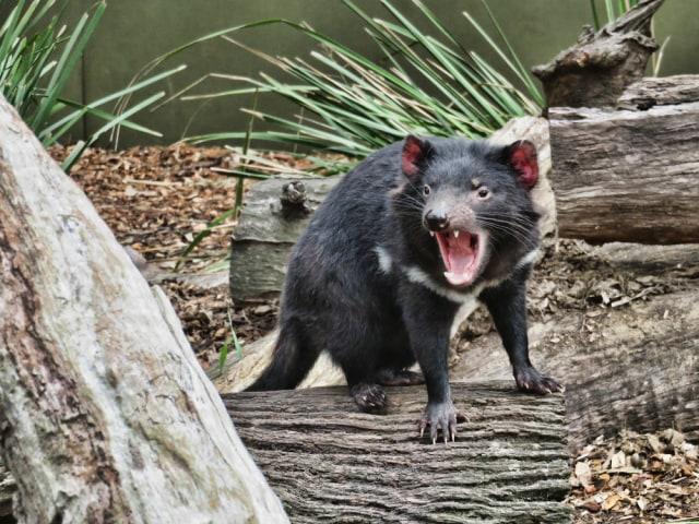 Wisata Wildlife yang Wajib Kamu Jelajahi saat ke Australia (138166)