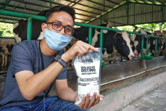 Melihat Tempat Produksi Susu Sapi Perah di Gisting Dairy Farm, Lampung (298131)