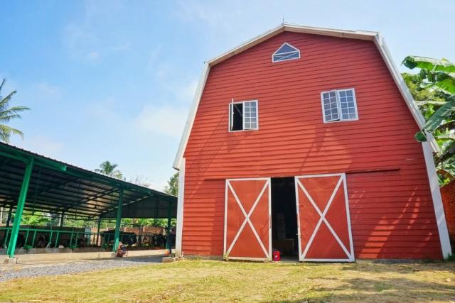 Melihat Tempat Produksi Susu Sapi Perah di Gisting Dairy Farm, Lampung (298129)