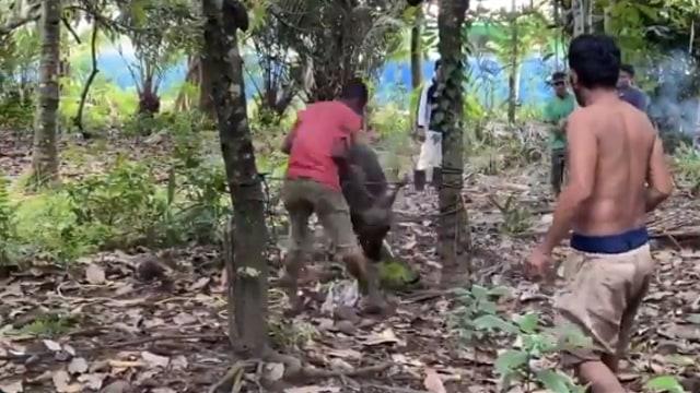 Pria Ini Malah Keluarkan Jurus Silat Usai Diseruduk Sapi Kurban yang Ngamuk (381994)