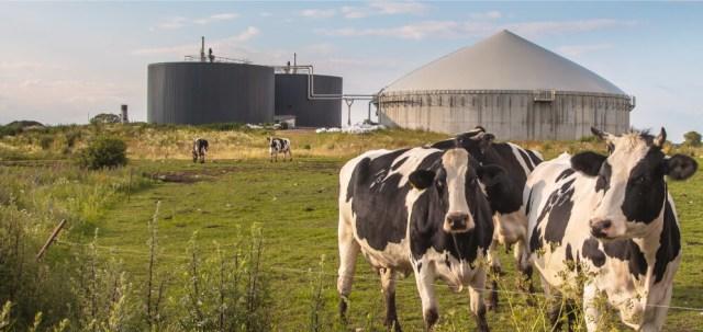 Peternakan dan Pabrik MilkLife Terintegrasi Demi Hasilkan Susu Berkualitas (17093)