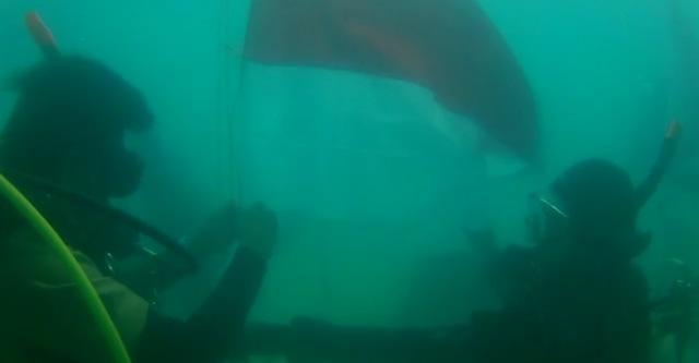 Kibarkan Bendera Merah Putih, 8 Club Diving Ini Kenalkan Wisata Bawah Laut Babel (216217)