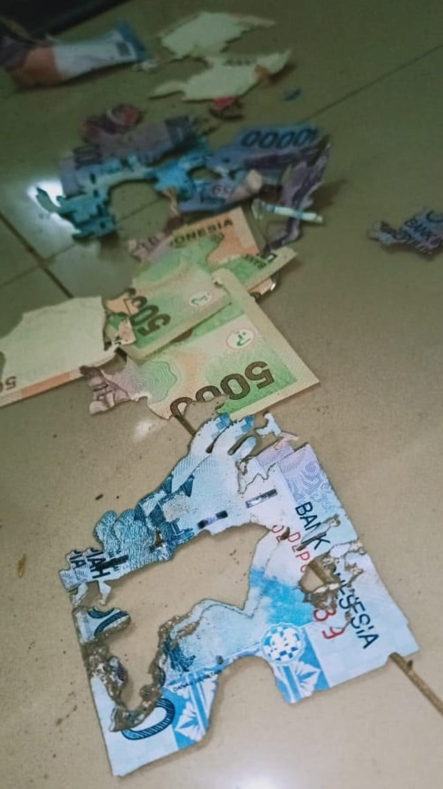 Uang Rp 3,5 Juta Warga Sulsel Ludes Dimakan Rayap karena Disimpan di Bawah Kasur (82327)