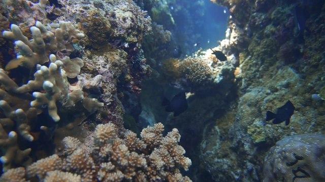 Foto: Keindahan Bawah Laut Lokasi Bekas Patahan Bumi di Perairan Pulau Babi, NTT (143009)