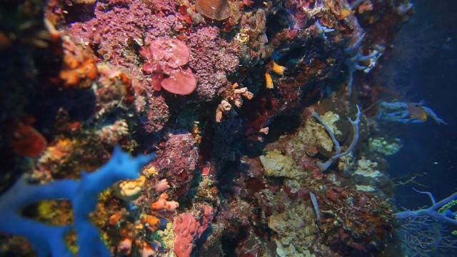 Foto: Keindahan Bawah Laut Lokasi Bekas Patahan Bumi di Perairan Pulau Babi, NTT (143010)