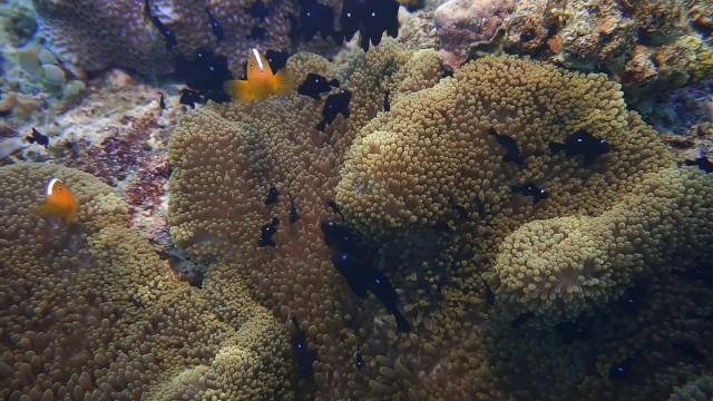 Foto: Keindahan Bawah Laut Lokasi Bekas Patahan Bumi di Perairan Pulau Babi, NTT (143011)