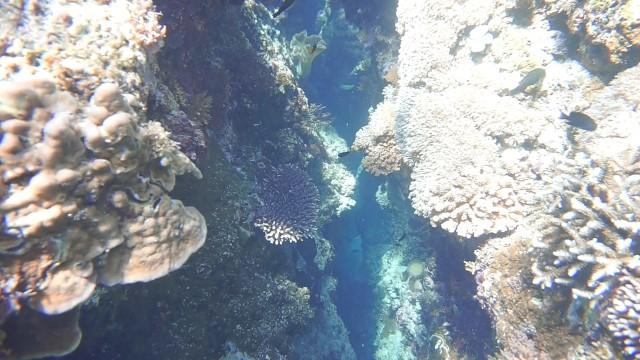 Foto: Keindahan Bawah Laut Lokasi Bekas Patahan Bumi di Perairan Pulau Babi, NTT (143012)
