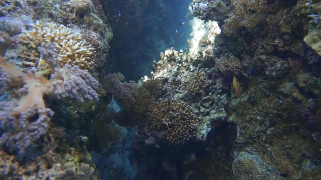 Foto: Keindahan Bawah Laut Lokasi Bekas Patahan Bumi di Perairan Pulau Babi, NTT (143013)