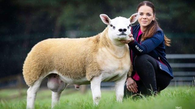 Ini Domba Termahal di Dunia Seharga Rp 7,1 Miliar (734115)