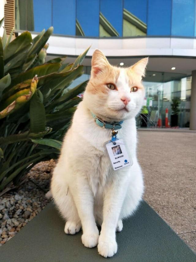 Kucing Ini Diangkat Jadi Security Rumah Sakit, Begini Ceritanya! (Foto: The Dodo)