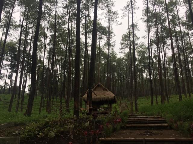 Hutan Pinus Keraton, Wisata yang Jadi Wadah Pembinaan Pemuda Desa (33783)