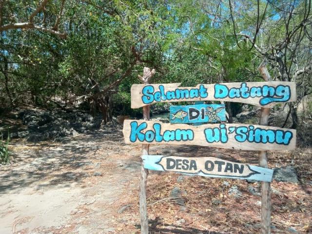 Kolam Ui' Simu, Spot Wisata Penyu di Pulau Semau, NTT (306939)