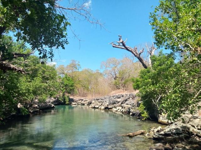 Kolam Ui' Simu, Spot Wisata Penyu di Pulau Semau, NTT (306940)