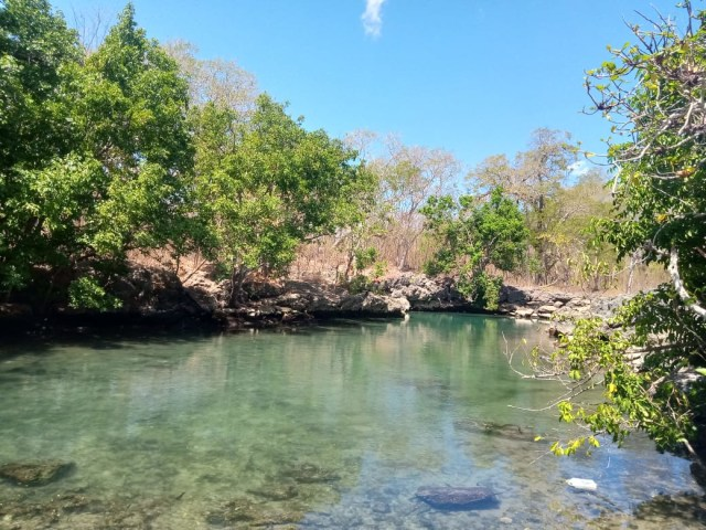 Kolam Ui' Simu, Spot Wisata Penyu di Pulau Semau, NTT (306941)