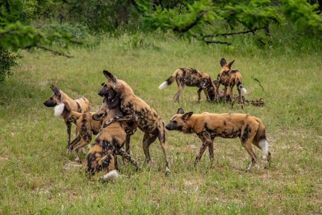 Hewan-hewan dengan Ikatan Kekeluargaan yang Kuat (46879)