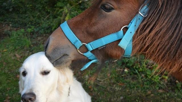 Ternyata Anjing dan Kuda dapat Menjalin Persahabatan  (300992)