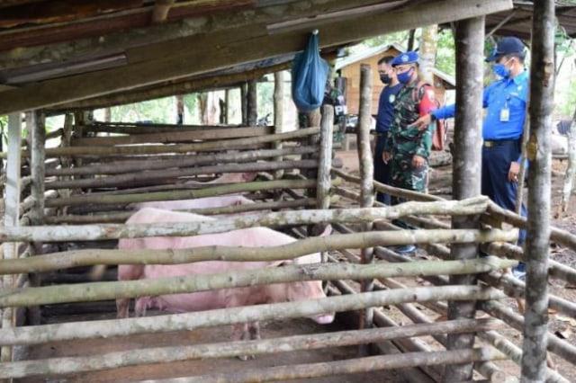 Lanud Hang Nadim Batam Temukan Peternakan Babi di Kawasan KKOP (197795)