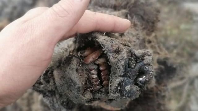 Ilmuwan Temukan Beruang Purba yang Punah Sejak Zaman Es, Organnya Masih Utuh (215652)