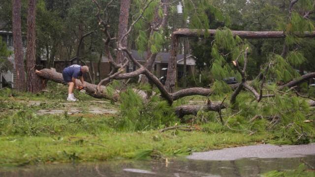 Foto: Pohon-pohon yang Tumbang Akibat Badai Sally di Amerika Serikat (300874)