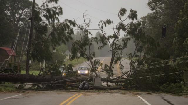 Foto: Pohon-pohon yang Tumbang Akibat Badai Sally di Amerika Serikat (300872)