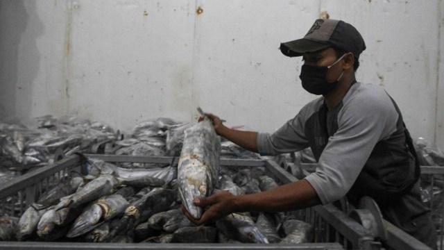 Bukan 1, Ada 6 Sampel Ikan Ekspor RI ke China yang Mengandung Patogen COVID-19  (27016)
