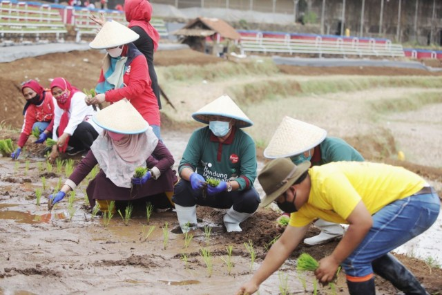 Lahan Terbatas, Pemkot Bandung Kembangkan Integrated Farming (215557)
