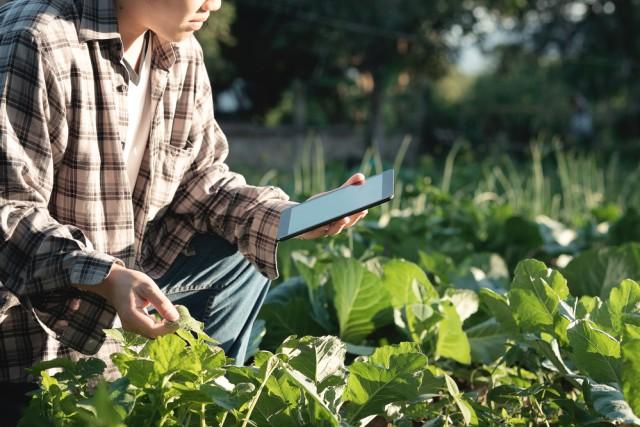 Digitalisasi Pertanian, Apa Saja Manfaatnya? (30553)