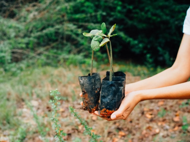 6 Aktivitas Liburan Ramah Lingkungan  (516001)
