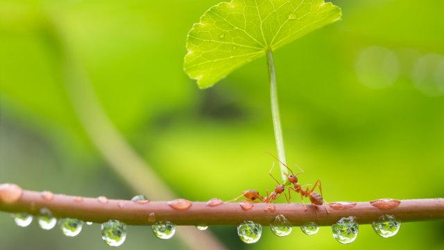 Dongeng Anak Islami: Doa Semut Minta Hujan dan Nabi Sulaiman (267788)