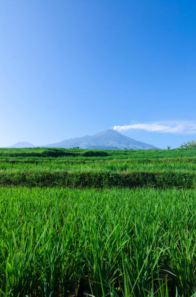 Jalur Pendakian Gunung Arjuno Welirang Via Tambaksari Dan Tretes Dibuka Kembali Kumparan Com