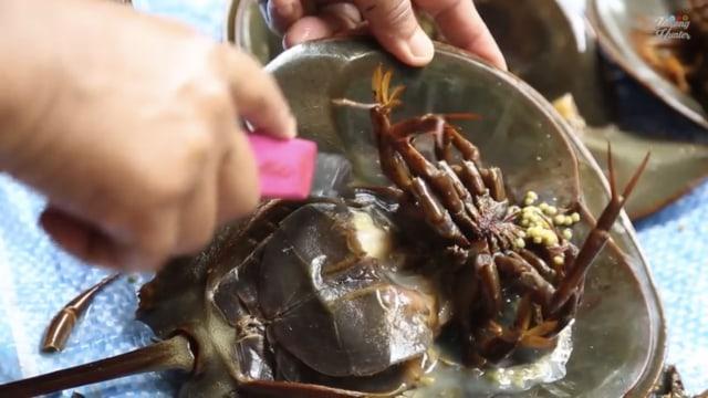 Wow! Video Viral di YouTube Ini Tunjukan Cara Menyiangi Kepiting Tapal Kuda  (70497)