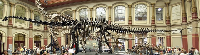 Ini 3 Dinosaurus Terbesar yang Pernah Kuasai Planet Bumi (75643)