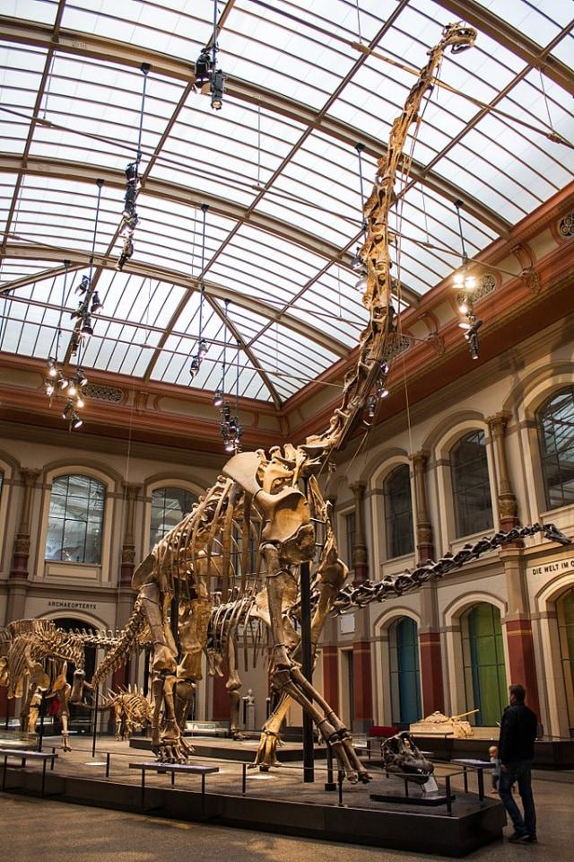 Ini 3 Dinosaurus Terbesar yang Pernah Kuasai Planet Bumi (75639)