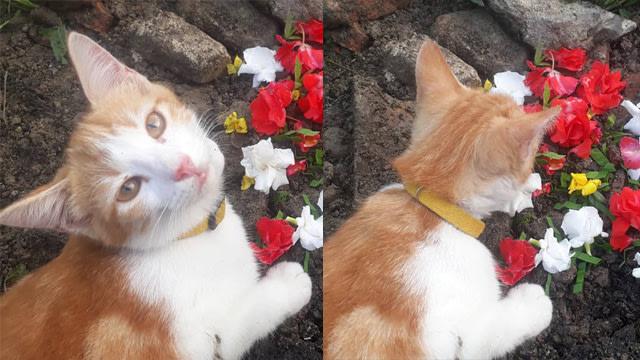 Momen Kucing Tiap Hari Datangi Kuburan Adik, Termenung Sendirian Bikin Pilu (10660)