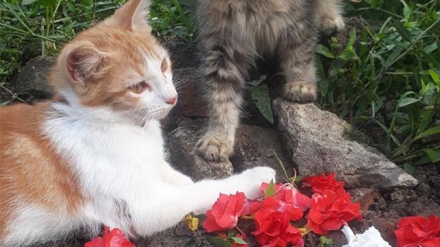 Momen Kucing Tiap Hari Datangi Kuburan Adik, Termenung Sendirian Bikin Pilu (10661)