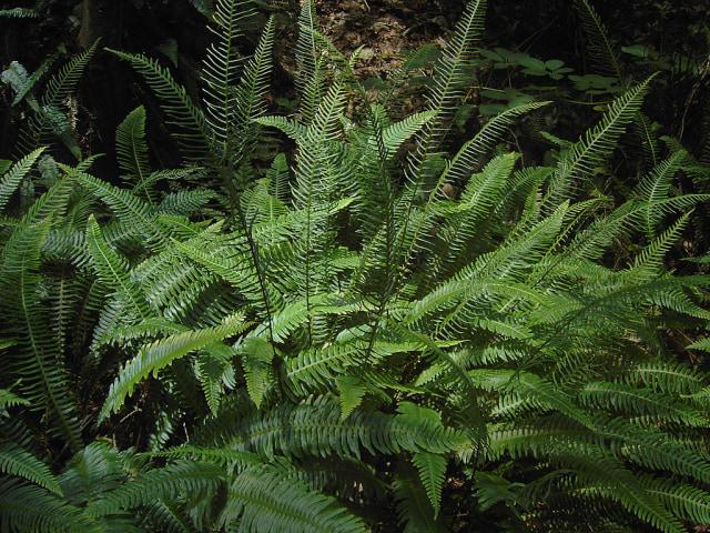 15 Tanaman Ini Sudah Hidup di Bumi Sejak Zaman Dinosaurus (95560)